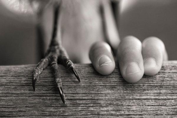 Penguin Bloom's foot and Reuben's hand
